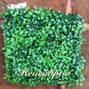 Heucalipto